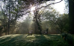 Benches in trees - Pendle Hill Retreat Center